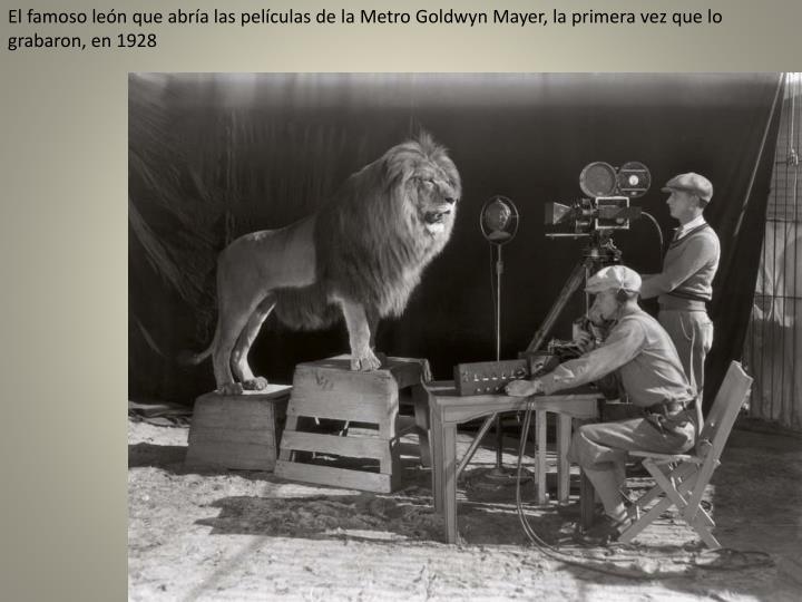 El famoso león que abría las películas de la Metro
