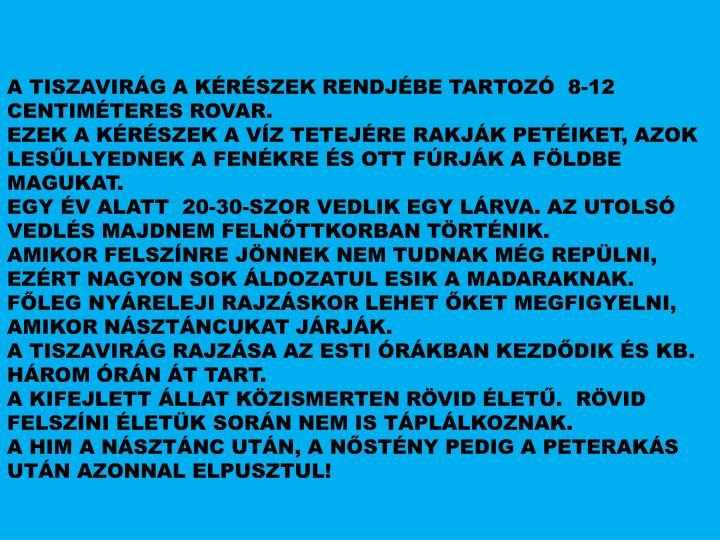 A TISZAVIRÁG A KÉRÉSZEK RENDJÉBE TARTOZÓ  8-12 CENTIMÉTERES ROVAR.