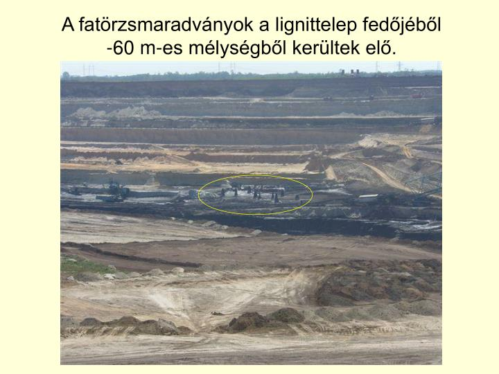 A fatörzsmaradványok a lignittelep fedőjéből