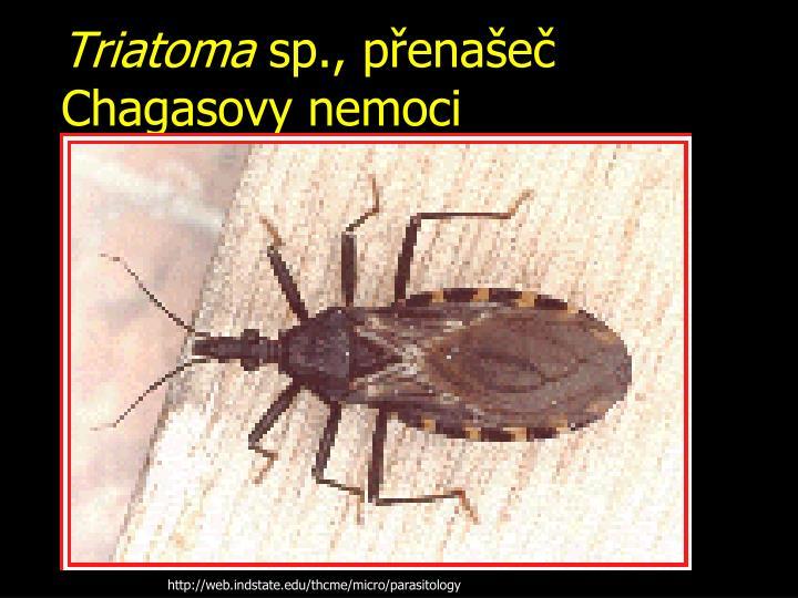 Triatoma