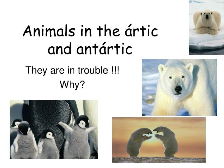 Animals in the ártic and antártic