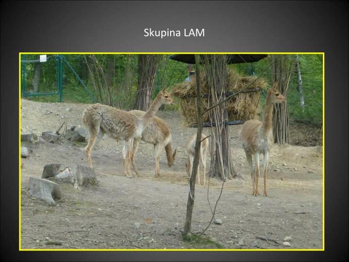 Skupina LAM