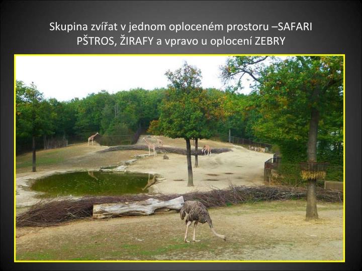 Skupina zvířat v jednom oploceném prostoru –SAFARI