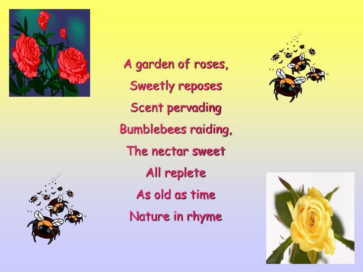 A garden of roses,