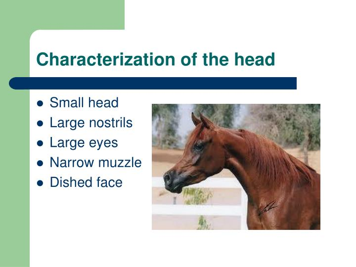 Characterization of the head