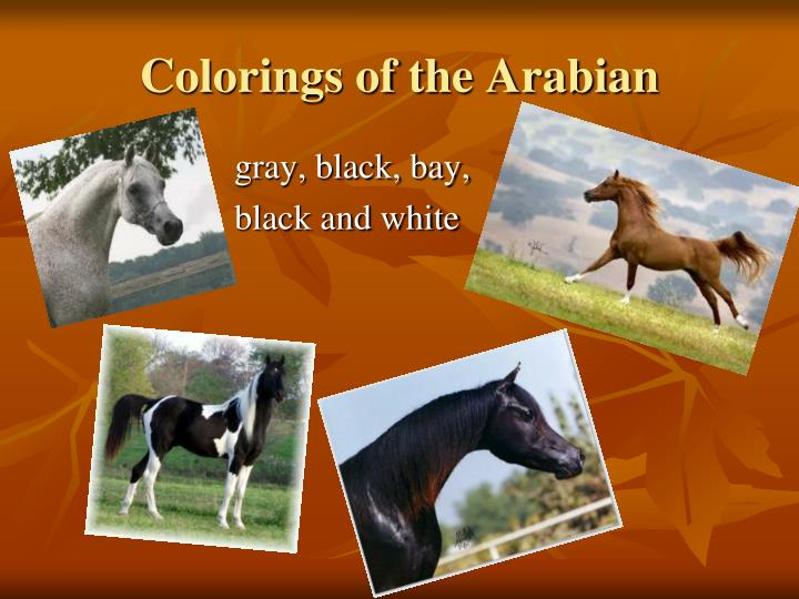 Colorings of the Arabian