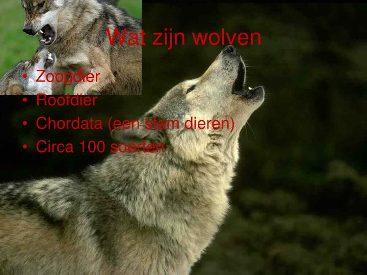 Wat zijn wolven