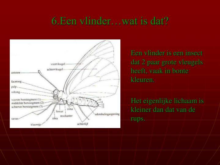 6.Een vlinder…wat is dat?