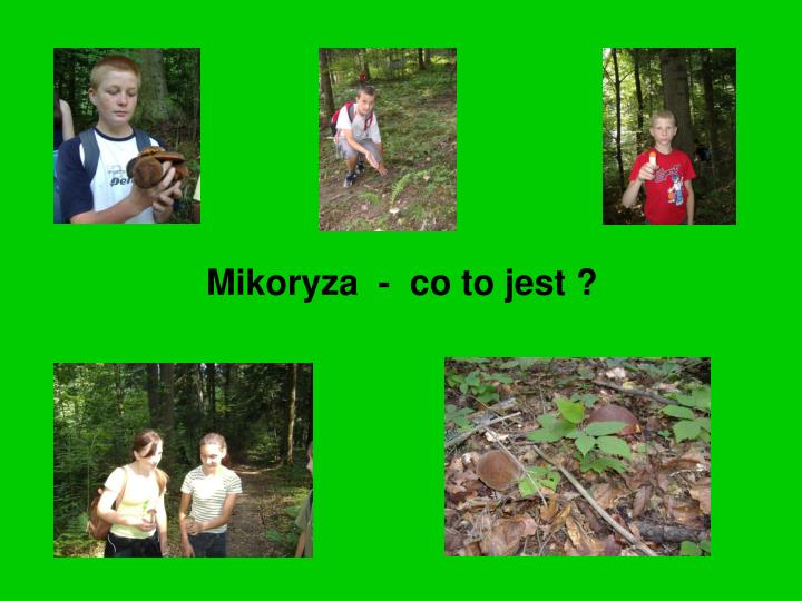 Mikoryza  -  co to jest ?