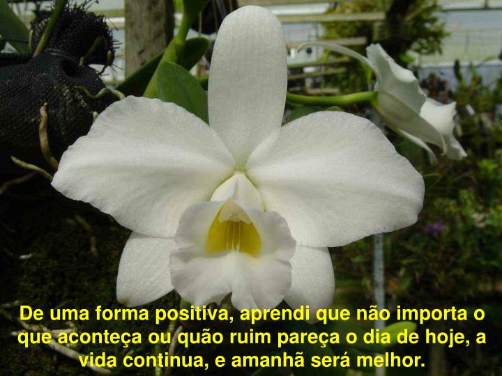 De uma forma positiva, aprendi que não importa o que aconteça ou quão ruim pareça o dia de hoje, a vida continua, e amanhã será melhor.
