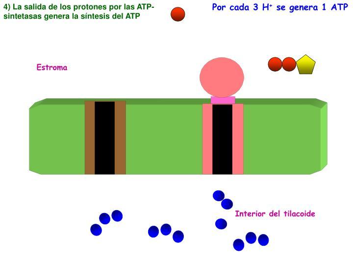 4) La salida de los protones por las ATP-sintetasas genera la síntesis del ATP