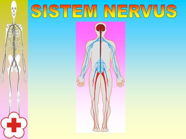 SISTEM NERVUS
