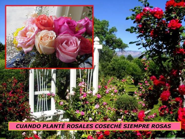 CUANDO PLANTÉ ROSALES COSECHÉ SIEMPRE ROSAS