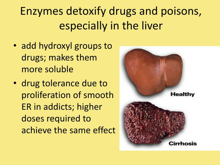Enzymes detoxify drugs and poisons, especially in the liver