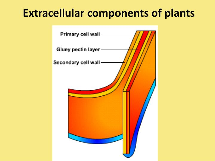 Extracellular components of plants
