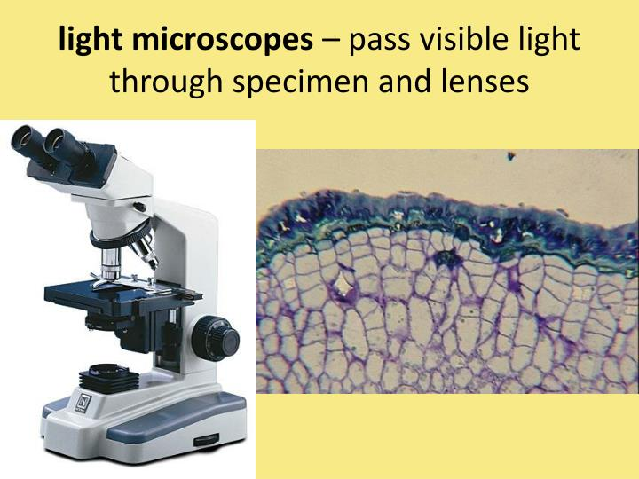 Light microscopes pass visible light through specimen and lenses