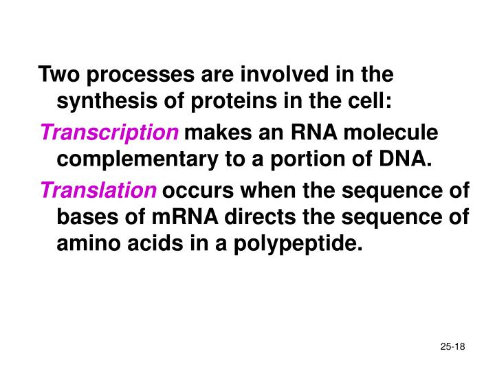 Two processes are involved in the synthesis of proteins in the cell: