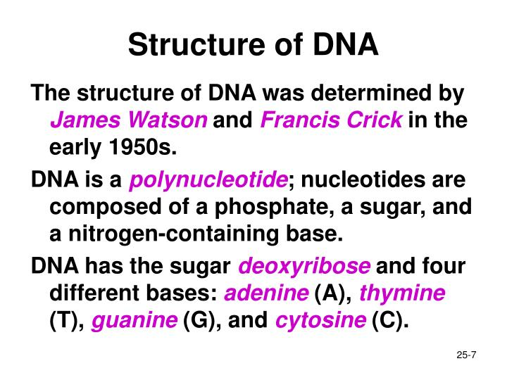 Structure of DNA