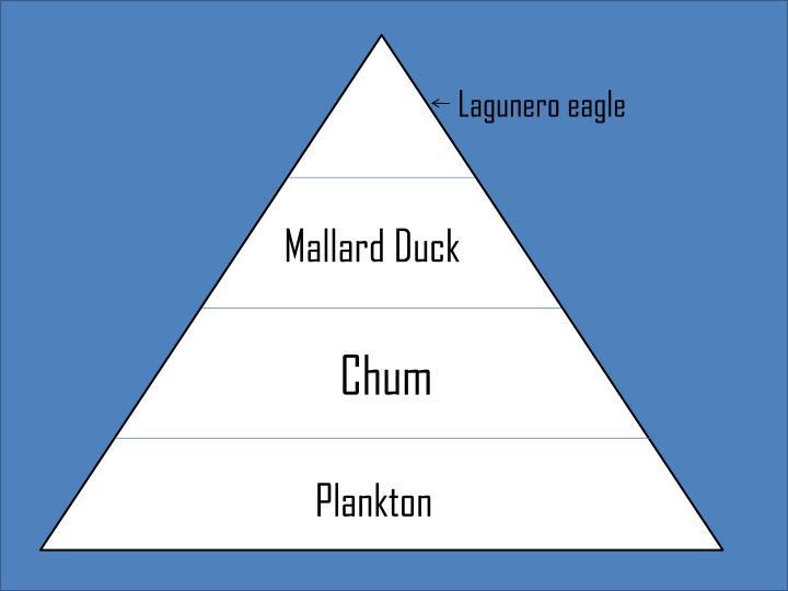 Lagunero eagle