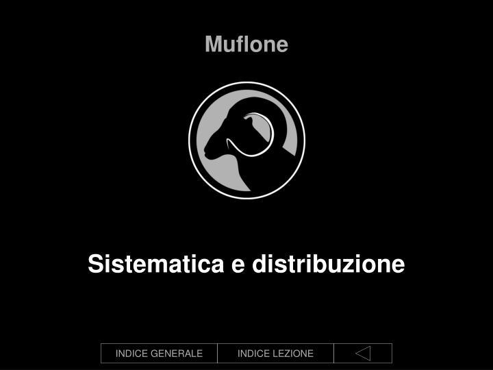 Muflone