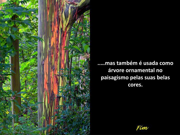 ..…mas também é usada como árvore ornamental no paisagismo pelas suas belas cores.