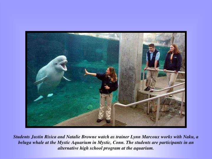Students Justin Risica and Natalie Browne watch as trainer Lynn Marcoux works with Naku, a beluga whale at the Mystic Aquarium in Mystic, Conn. The students are participants in an alternative high school program at the aquarium.