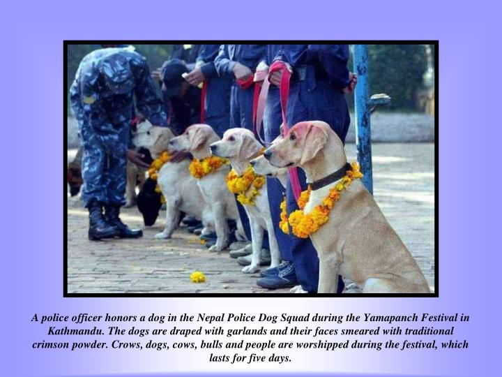 A police officer honors a dog in the Nepal Police Dog Squad during the Yamapanch Festival in Kathmandu. The dogs are draped with garlands and their faces smeared with traditional crimson powder. Crows, dogs, cows, bulls and people are worshipped during the festival, which lasts for five days.