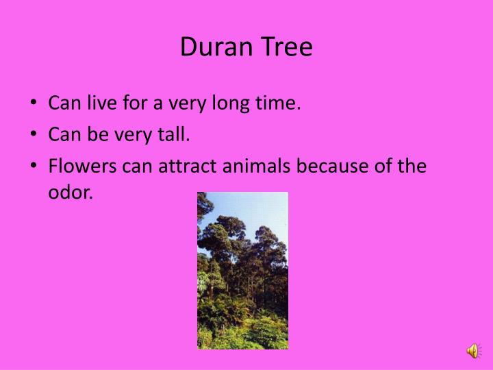 Duran Tree