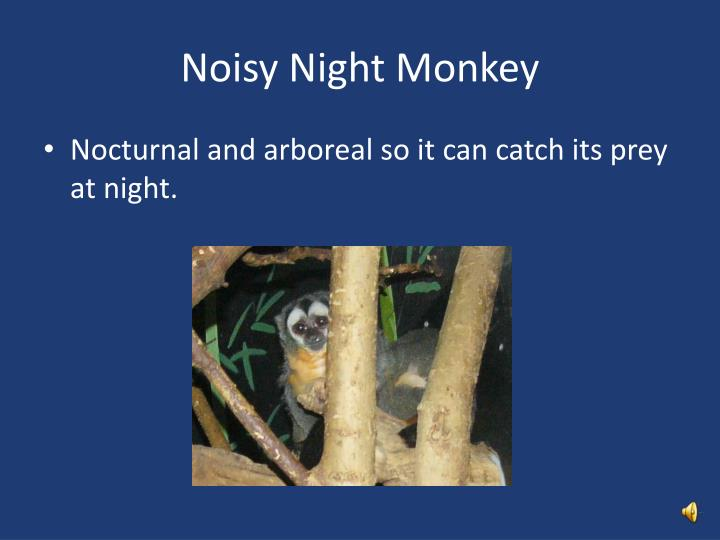 Noisy Night Monkey