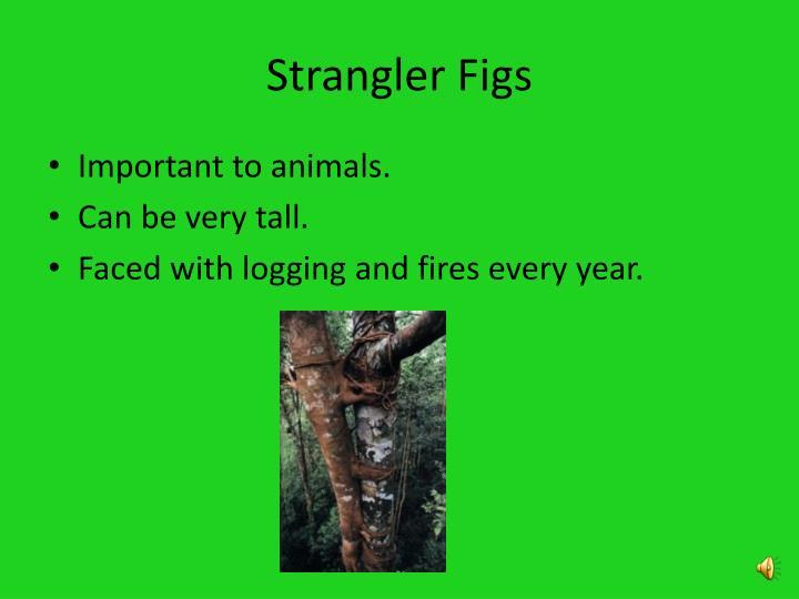 Strangler Figs
