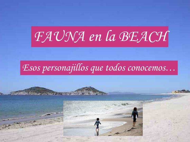 FAUNA en la BEACH