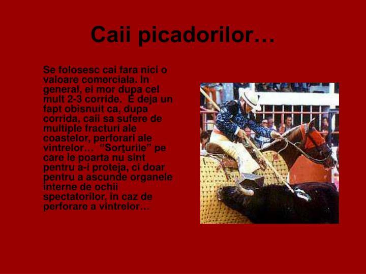 Caii picadorilor…