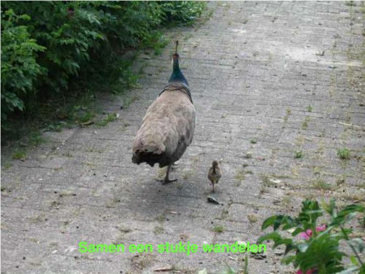 Samen een stukje wandelen