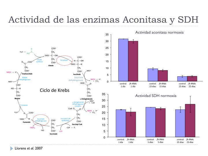 Actividad de las enzimas Aconitasa y SDH