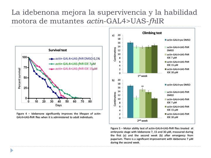 La idebenona mejora la supervivencia y la habilidad motora de mutantes