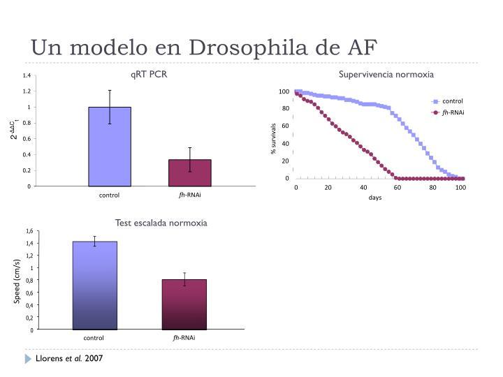 Un modelo en Drosophila de AF