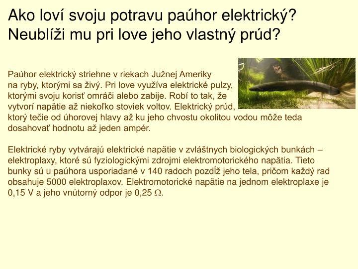 Ako loví svoju potravu paúhor elektrický? Neublíži mu pri love jeho vlastný prúd?