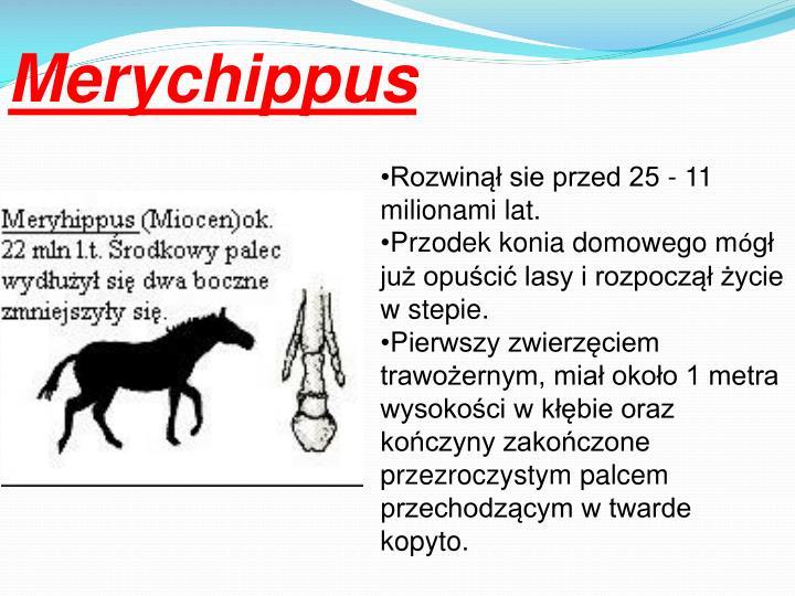 Merychippus