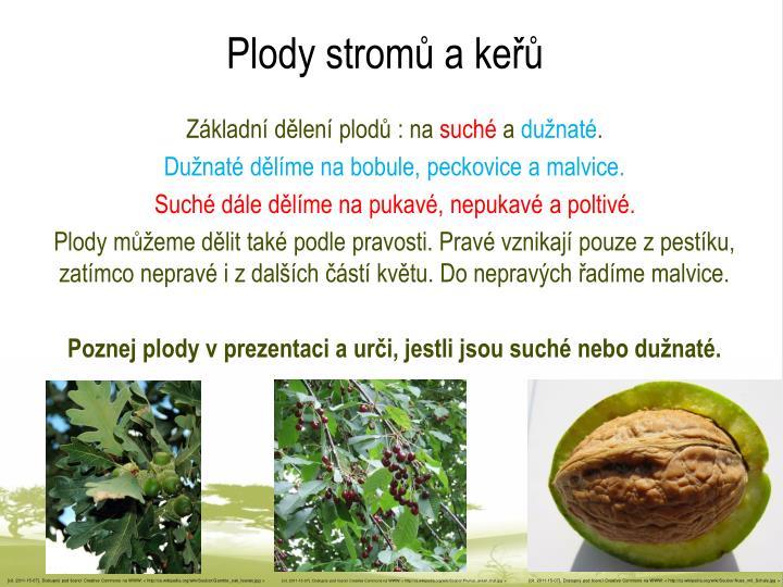 Plody stromů a keřů