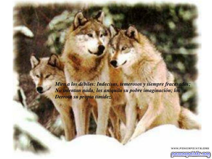 Mira a los débiles: Indecisos, temerosos y siempre fracasados;
