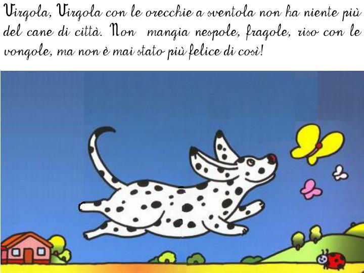 Virgola, Virgola con le orecchie a sventola non ha niente più del cane di città. Non  mangia nespole, fragole, riso con le vongole, ma non è mai stato più felice di così!