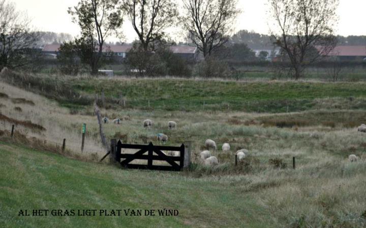 Al het gras ligt plat van de wind