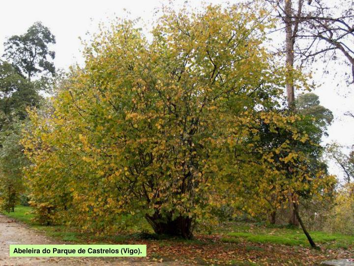 Abeleira do Parque de Castrelos (Vigo).