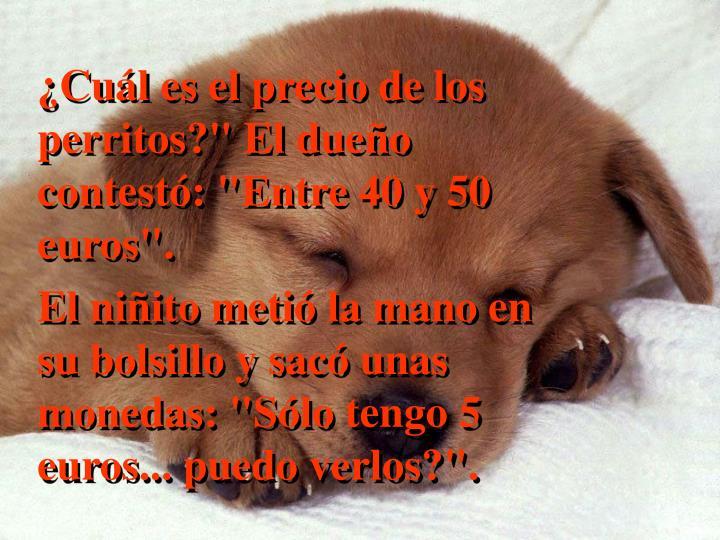 """¿Cuál es el precio de los perritos?"""" El dueño contestó: """"Entre 40 y 50 euros""""."""