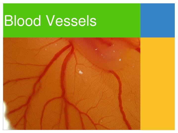 Blood Vessels