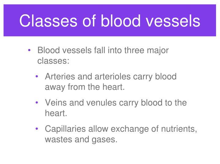 Classes of blood vessels