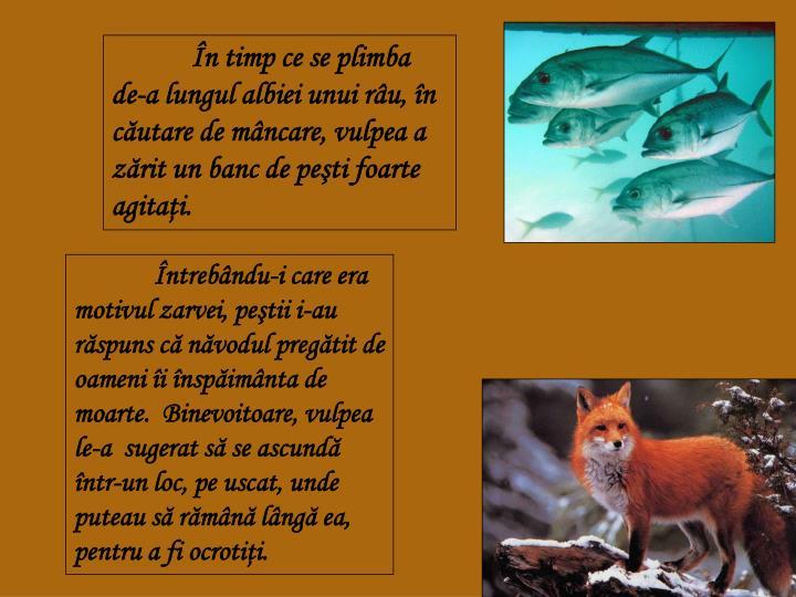 În timp ce se plimba de-a lungul albiei unui râu, în căutare de mâncare, vulpea a zărit un banc de peşti foarte agitaţi.