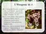 5 w inogrona1
