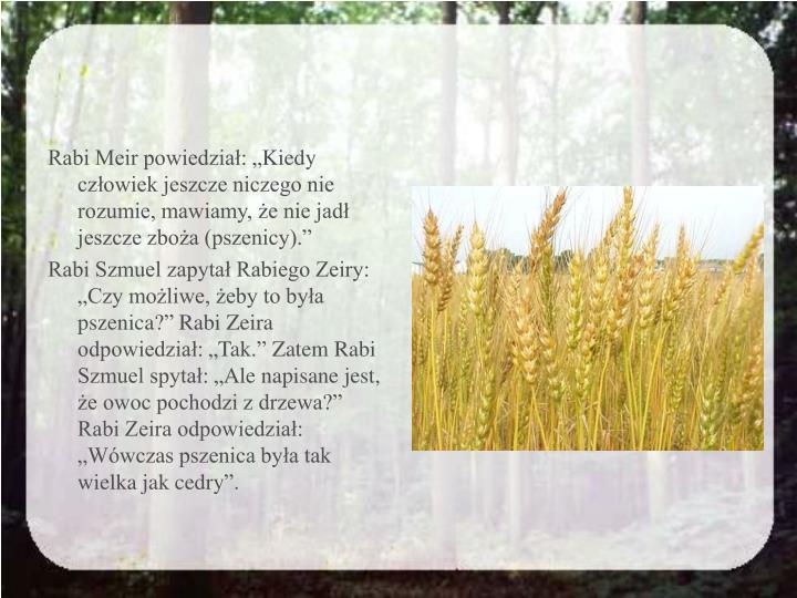 """Rabi Meir powiedział: """"Kiedy człowiek jeszcze niczego nie rozumie, mawiamy, że nie jadł jeszcze zboża (pszenicy)."""""""