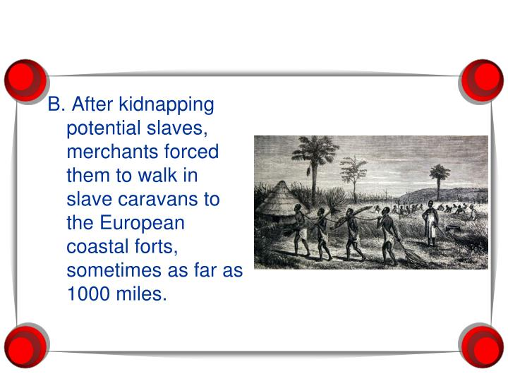 B. After kidnapping potential slaves, merchants forced them to walk in slave caravans to the European coastal forts, sometimes as far as 1000 miles.